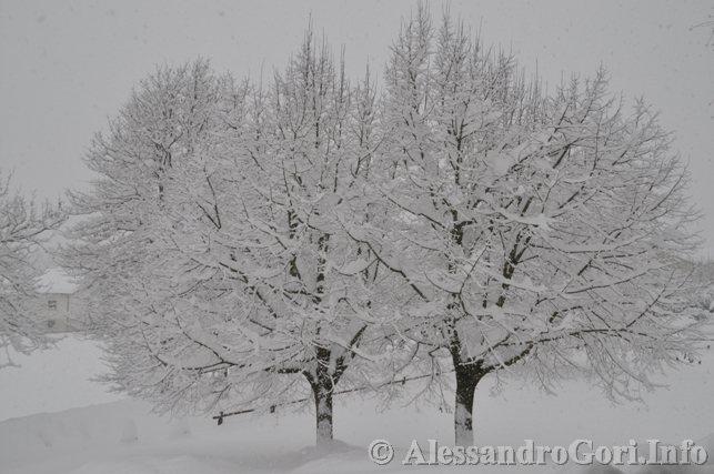 130212 neve in Carnia - Foto Alessandro Gori DSC_4459