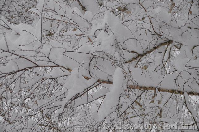 130212 neve in Carnia - Foto Alessandro Gori DSC_4462