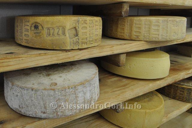 130919 Cheese 2013 - Foto Alessandro Gori DSC_0057