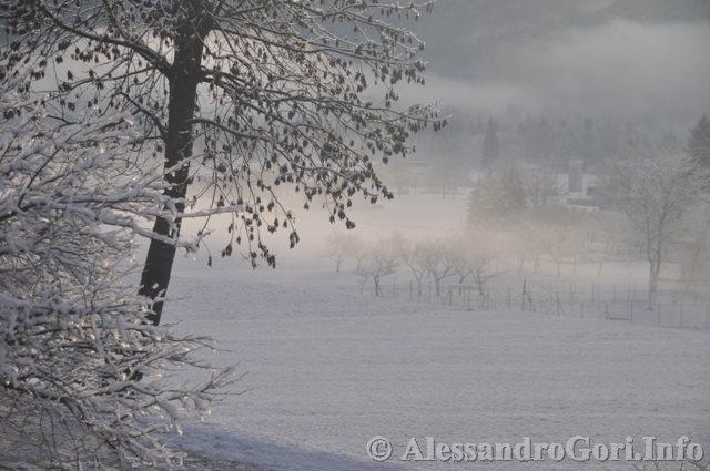 140128 nevicata in Carnia DSC_4711