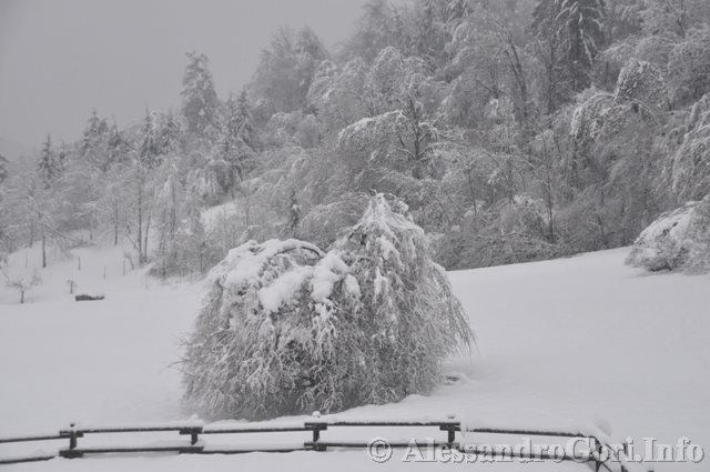 140131 nevicata in Carnia DSC_5063