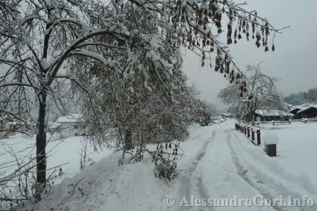 140131 nevicata in Carnia P1280158
