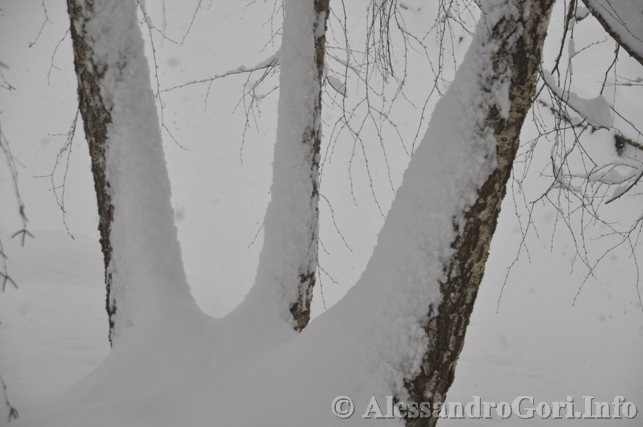 130212 neve in Carnia - Foto Alessandro Gori DSC_4460