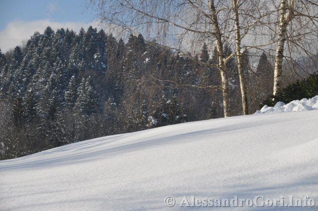 130212 neve in Carnia - Foto Alessandro Gori DSC_4477