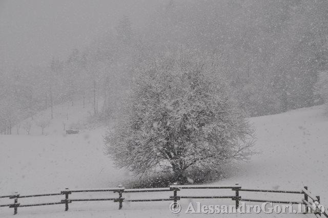 140130 nevicata in Carnia DSC_5042