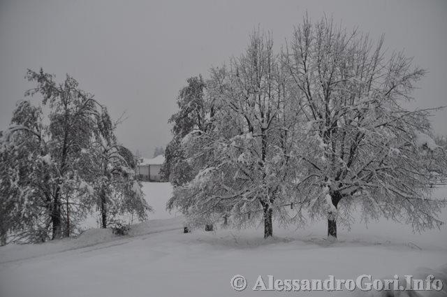 140131 nevicata in Carnia DSC_5060